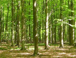 Desarrollo de incentivos para la conservación del monte nativo en la cuenca del Río Uruguay